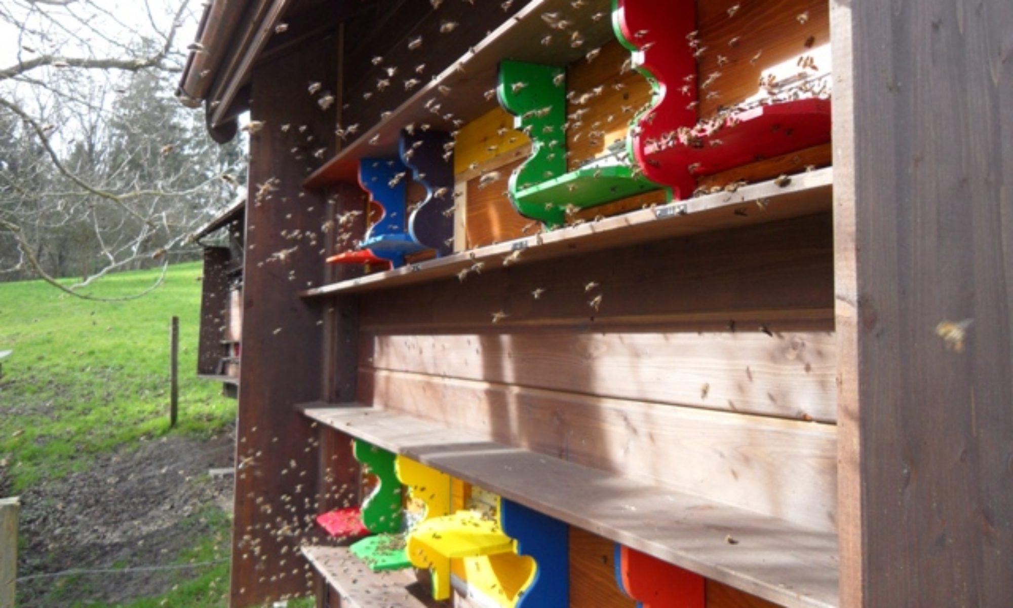 Bienenblog